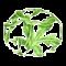 Rare Botanics